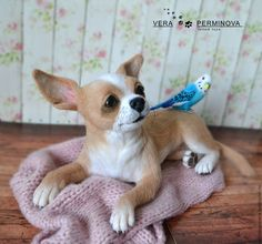 Collectible dolls handmade.  Fair Masters - handmade.  Buy Chihuahua named Grace and budgerigar named Archie.  Handmade.