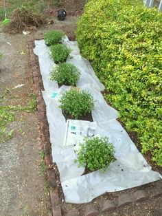 How to keep new plantings weed-free for longer each season