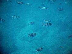 mauritius tauchen