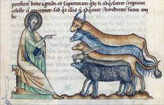 Manuscript Codex Bongarsianus 318 - Szukaj w Google