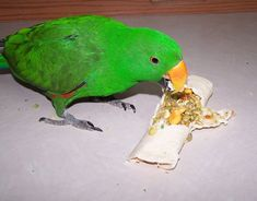 Tortilla wrap with bird chop or mush stuffed inside. Can also stuff into a leaf of kale or other greens. #parrotfood