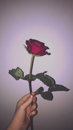16 Ideas For Aesthetic Wallpaper Flower Red Red Wallpaper, Tumblr Wallpaper, Flower Wallpaper, Wallpaper Backgrounds, Iphone Wallpaper, Aesthetic Roses, Red Aesthetic, Aesthetic Pictures, Photo D Art