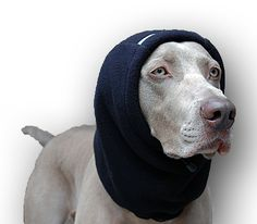 Chilly Dogs Head Muff XL Black - XL for Large and Giant Breed Dogs - Great Danes, Irish Wolfhound, Mastiff - DogGoneBig.com