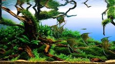 AGA-Aquascaping-Contest-Winner-best-in-show.jpg (560×317)