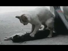 So much pain in this world that we don't see...  (cat actually tried to wake up 2 hours long, not only 4 min.)    More Info:    I got this information from the other video, link at the bottom (Turkish language video)    They were crossing the street until a car hit the black cat.  The cat was constantly doing a massage exactly there where the heart from...