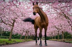 Q and the Cherry flowers by Erik Kunddahl on 500px