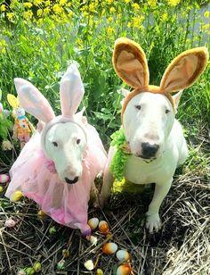 Easter Bullies