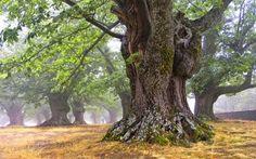 Stromy nám nabízejí sílu, lásku i zdraví | Blog.Eugenika