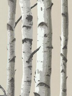 Bring the outside in with this Birch Tree Wallpaper. An enchanted woodland of towering birch trees makes this lodge style wall paper a perfectly rustic décor piece. With a shimmering pearlescent backd