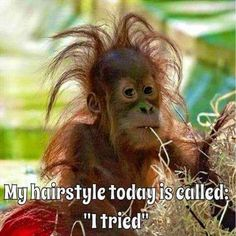 """My hairstyle today is called: """"I tried"""" funny jokes funny quotes humor funny pics fun quotes funny images fun pics jokes and fun Funny Animal Memes, Animal Quotes, Funny Animal Pictures, Funny Animals, Funny Memes, Funniest Memes, Funniest Quotes Ever, Animal Humor, Funny Sayings"""