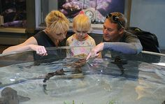 Margaret, Addison, and Andy Atkinson, visiting from Florida, check out the shark touch tank at the #SeaCenter in #SantaBarbara #California / *click pic for article