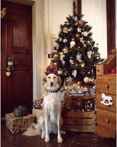 Dog in christmas