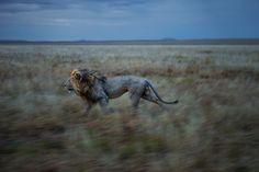 1st Place, Michael Nichols, USA | World Photography Organisation