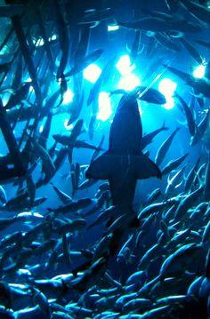 Dubai Mall Aquarium – Dubai, UAE ... cheapest hotels in Dubai #UAE #Dubai http://holipal.com/hotels/