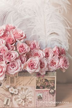 Pink roses, white feathers, rose cottage