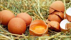 Weiße Schnur & roter Fleck im Ei. Was essen wir da eigentlich? - Zwei Mythen rund ums Ei – | ||| | || CODECHECK.INFO