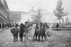 fotos antiguas de quito colonial - Buscar con Google