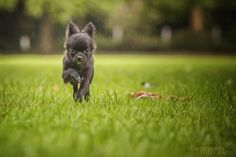 Runing Day with wet Dog by sven.schubert.39
