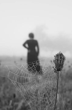 love the spider web! i think it would be so beautiful without the woman in the back, brings more focus to the natural beauty of the scene...less eerie