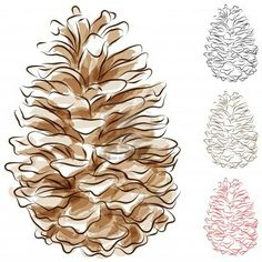 watercolor pine cone painting - Google Search