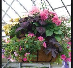 Other petunia basket