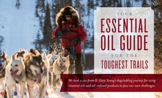Over two consecutive weekends in January and February 2017, Young Living Founder and Chairman of the Board D. Gary Young competed in two challenging dogsled races in Alaska, with a total of 500 race miles. Gary competed in these two races to raise awareness and money for The D. Gary Young, Young Living Foundation's ongoing project in Nepal to ...