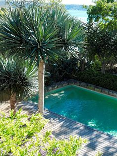 Dracaena draco and pool - houseplants gone wild. Front Yard Plants, Fence Plants, Outdoor Pool, Outdoor Gardens, Indoor Outdoor, Indoor Gardening, Backyard Pool Designs, Pool Landscaping, Gardens