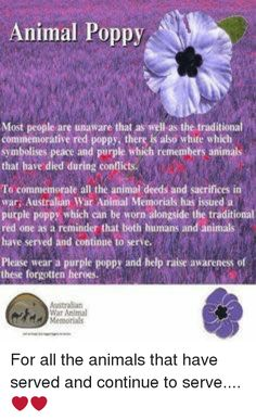 Purple: Animal Poppy Most people are unaware that as well as the traditional commemorative red poppy, there is also white which symbolises peace and purple, which remembers animals that have died during conflicts. To commemorate all the animal deeds and sacrifices in war, Australian War Animal Memorials has issued a purple poppy which can be worn alongside the traditional red one as a reminder that both humans and animals have served and continue to serve. Please wear a purple poppy and help… Remembrance Day Pictures, Remembrance Day Quotes, Remembrance Day Activities, Purple Poppy Animal Remembrance, Poppy Craft For Kids, November Events, Anzac Soldiers, Patriotic Pictures, Canadian Things