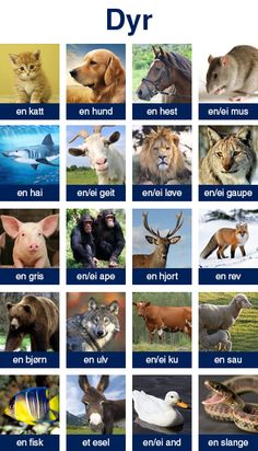 Dyr - animal names in Norwegian Icelandic Language, Swedish Language, Learn Swedish, Learn German, Norway Language, Norwegian Words, Norway Winter, Norwegian Vikings, Speaking In Tongues
