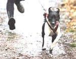 awesome Canicross o correr con tu perro