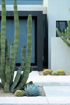 Cactus en la decoración de jardines
