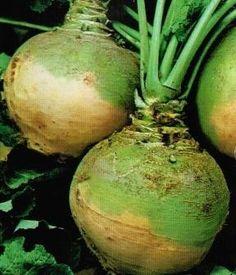 Chou Rave, Turnip Greens, Organic Vegetables, Planting Seeds, Onion, Outdoor Living, Christmas Bulbs, Home And Garden, Plants