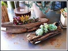 driftwood and succulent centerpieces -