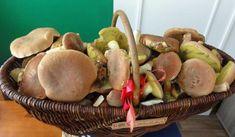 Jak připravit tekutý houbový výtažek | recept Korn, Stuffed Mushrooms, Vegetables, Stuff Mushrooms, Vegetable Recipes, Veggies