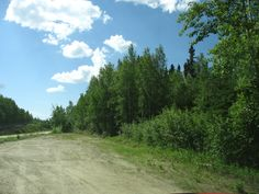 All overgrown now this is the 5 acre site along the Parks highway half way between College and Nenana that we owned along with my uncle and aunt. It was to be the site of a lodge and restaurant. The dream died along with my uncle.