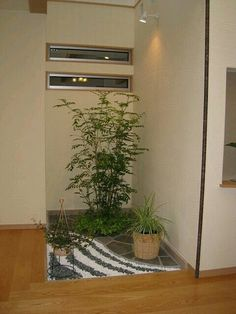 Zen Gardens Japanese Small Indoor Garden Plants Green Style Backyard Ideas