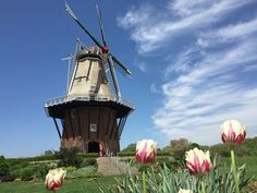The DeZwaan windmill in Holland Michigan.