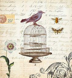 Botanical Print Art Collage Blue Bird bee moth birdcage Vintage PRINT ONLY, $16.00 @Paige Hereford Hereford Hereford Hereford FJ