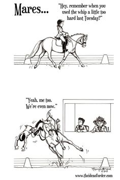 Mares will be mares! Funny Horse Memes, Funny Horse Pictures, Funny Horses, Horse Riding Quotes, Horse Quotes, Animal Quotes, Funny Animal Videos, Funny Animals, Horse Animation