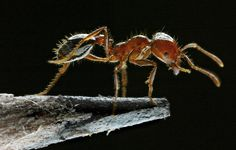 To find diversity hot spots, follow the ants: NYTimes blog features N.C. State University ant biodiversity research
