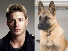 The Supernatural cast as dogs. Two things. 1. I love that Sam is basically a hairier version of Dean. 2. Gabriel and the Corgi? Separated at birth! Same expression and it kills me, haha!