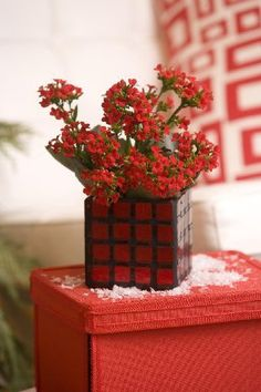 Caring for Christmas gift/plants ~ Kalanchoe