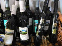 Na návšteve vo vinárstve Miroslav DUDO -  ...... www.vinopredaj.sk ......  #vinarstvo #dudo #miroslavdudo #vinarstvodudo #winery #inmedio #vinotreka #vinaren #vinotekavinaren #vinohrady #vineyards #vmd #pezinok #harmonia #vinar #winemaker #wineshop #delishop #delikatesy #deli #slovensko #slovak #slovakia #pijemevino #pivnica #degustacia #ochutnavka #tasting