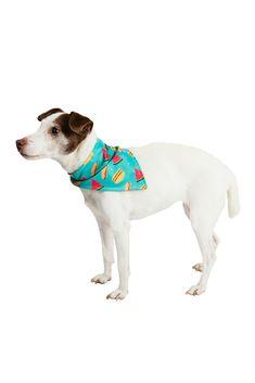 PET BANDANAS by C.R. Gibson Bandanas, Dog Lovers, Pets, Bandana, Animals And Pets