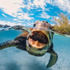 17 Awesome Go Pro Moments (Images & Gifs)