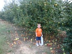 Where to Find Pick-Your-Own Fruit and Vegetable Farms / Orchards for Local, Fresh Fruit, Vegetables and Pumpkins, Along With Canning, Freezing & Preserving Instructions!