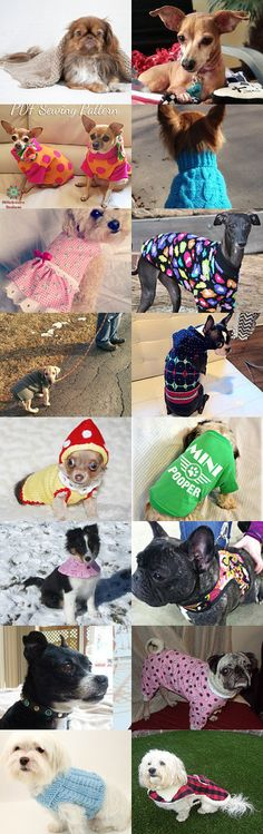 Small Dog Accessories by Gabbie on Etsy #etsy #treasury #dog #pet #accessories #sweet #cute