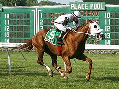 Hard Enough Proves Best In Saturday's Jersey Derby Horse Profile, Racehorse, Thoroughbred, Horse Racing, Derby, Dancer, Horses, Park, Animals