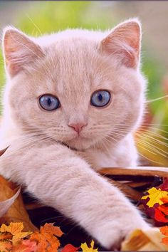 Some of them, have all those kittens looks. Wait till they grow Up! White Cats, Cute Cats And Kittens, Big Trucks, New Pictures, New Day, Dog Cat, Cute Animals, Gallery, Funny