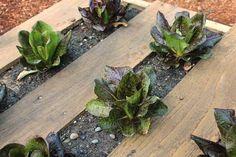 Horta feita em paletes de madeira (9)